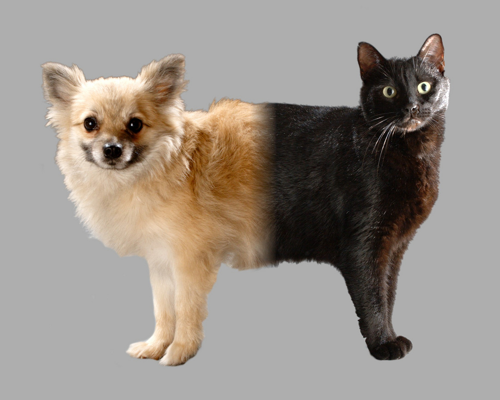 Hund oder Katze? (flickr.com @ tehbieber)