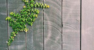 Holzzaun streichen und pflegen Tipps