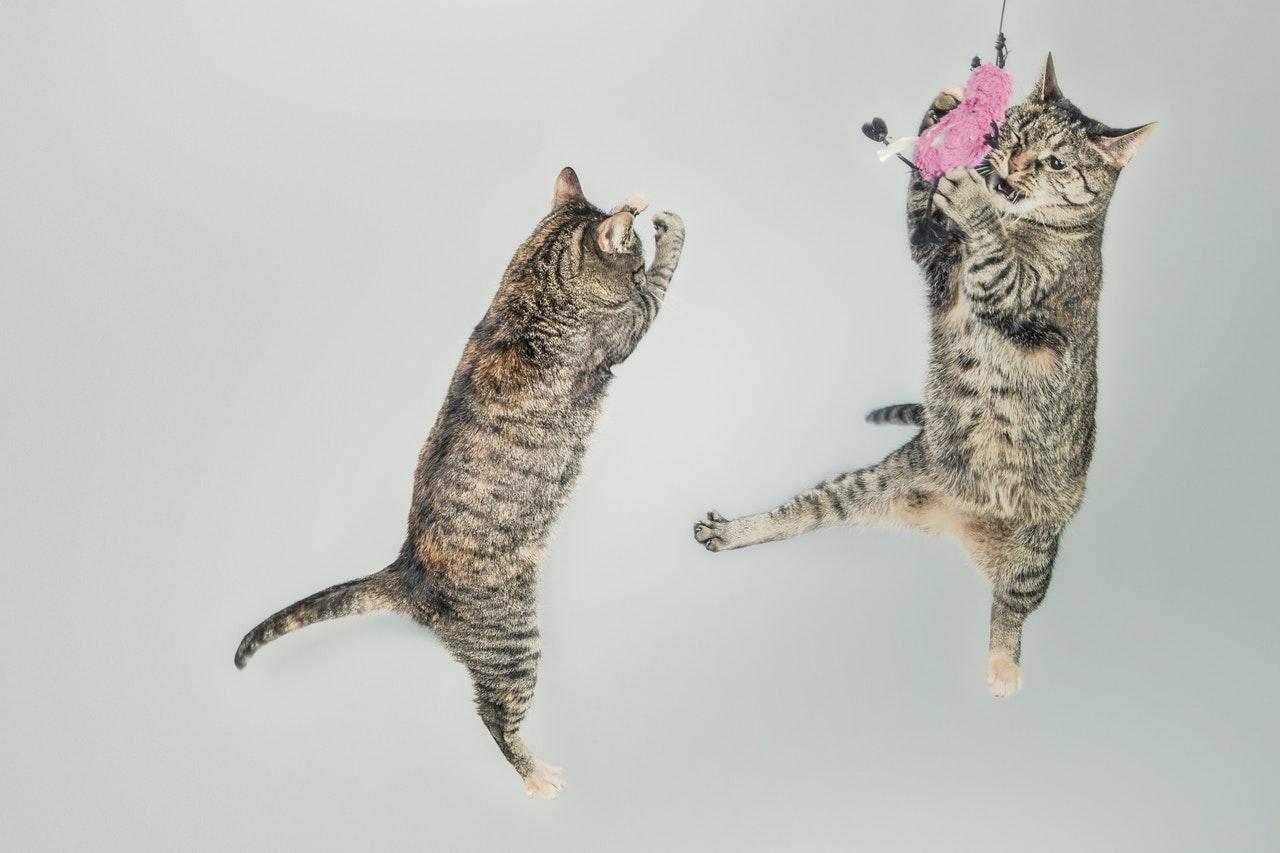 Warum müssen Katzen spielen und was gibt es an Katzenspielzeug?
