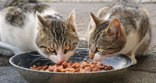 Artgerechtes Katzenfutter kaufen: 3 wichtige Tipps