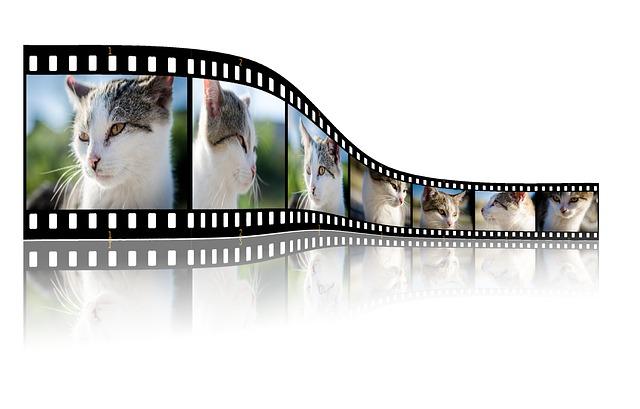 Warum Katzenvideos in Social Media so gut funktionieren